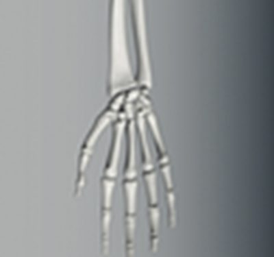 Mão e Punho